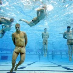 seal-swim-qual
