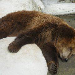 sluggish-bear